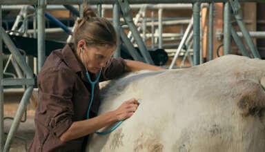 Fotograma 'Una veterinaria en la Borgoña'